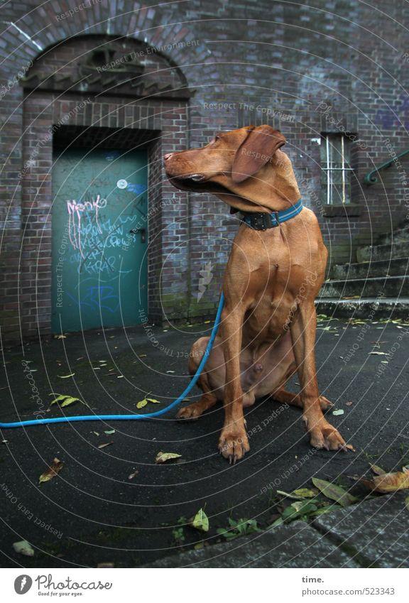 Ben wartet Mauer Wand Treppe Terrasse Tier Haustier Hund Hundeleine 1 Graffiti beobachten sitzen Neugier trashig Stadt braun Gelassenheit geduldig ruhig