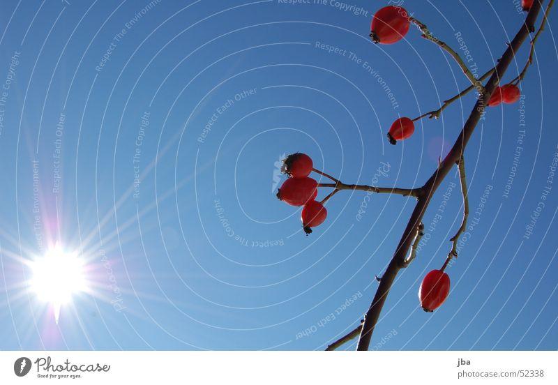schöner Tag rot Pflanze weiß Beleuchtung Strahlung Sonne Ast Himmel blau