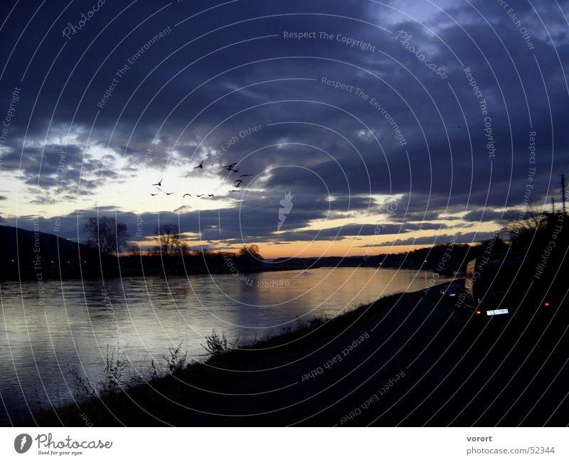 Meine geliebte Elbe Wasser Himmel Wolken dunkel Vogel Fluss Dresden Elbe Sonnenuntergang Vogelschwarm