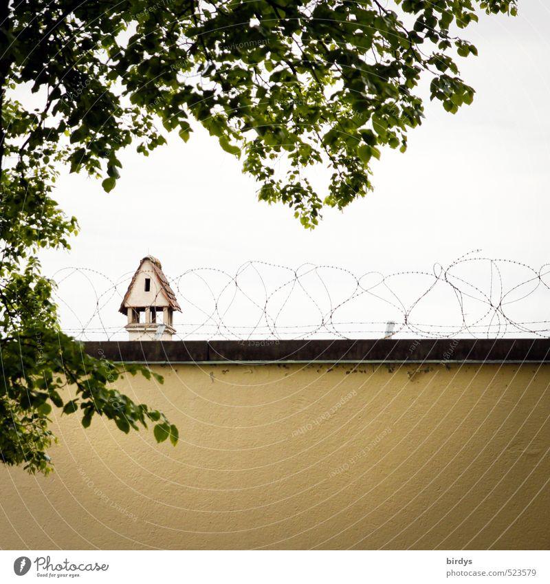 Protection Sommer Baum Mauer Wand Schornstein Stacheldraht authentisch stachelig gelb grün Schutz Misstrauen Angst Sicherheit abwehrend Farbfoto Außenaufnahme