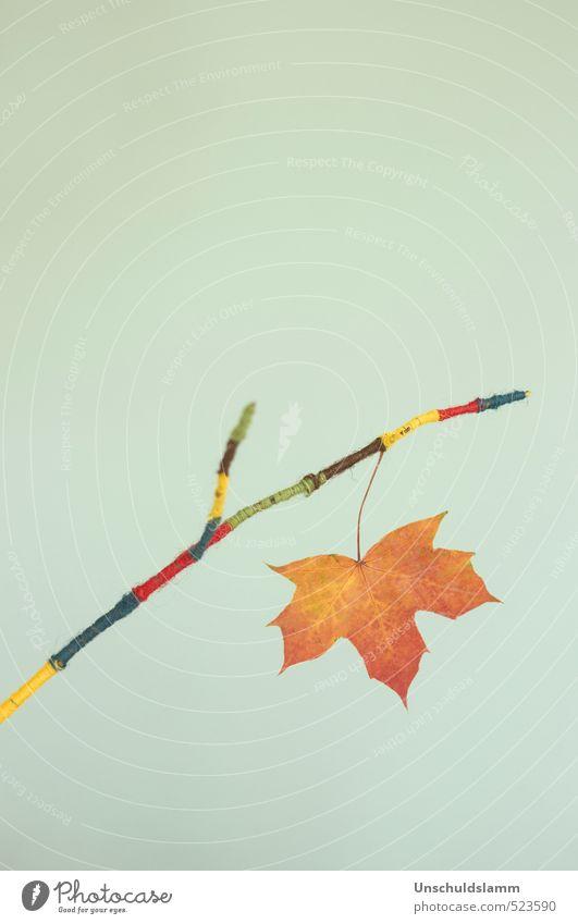 Kleiner Herbstgruß Natur blau grün rot Freude Blatt gelb Herbst Stil braun orange Freizeit & Hobby Wohnung Häusliches Leben Lifestyle Design
