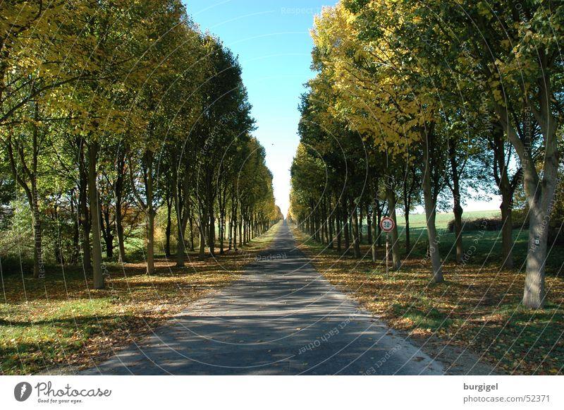 Allee Baum Straße Wege & Pfade