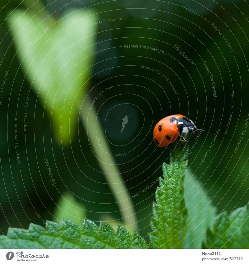 Übersicht Natur grün Pflanze Sommer rot Erholung Blatt Wald Umwelt Wiese Frühling Glück oben Garten Luft Angst