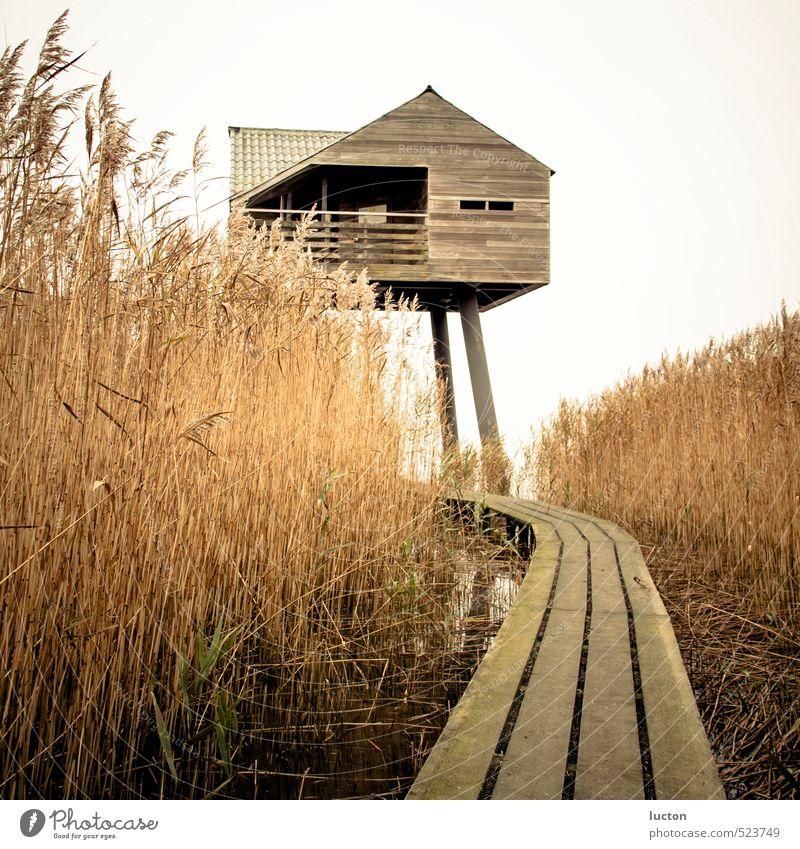 Vogelwacht Ferien & Urlaub & Reisen Tourismus Ausflug Ferne Meer Wattenmeer Natur Landschaft Herbst schlechtes Wetter Schilfrohr Küste Nordsee Turm Bauwerk Holz