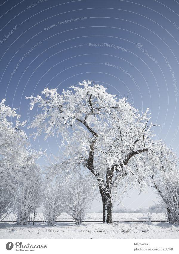 crystallize II Natur blau Wasser weiß Baum Landschaft Winter kalt Umwelt Schnee hell Eis Feld Sträucher Blühend Klima