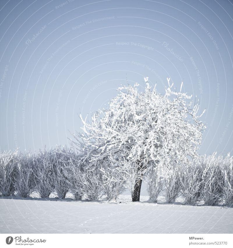 crystallize Umwelt Natur Landschaft Wasser Klima Schönes Wetter Eis Frost Schnee Blühend hell Coolness Schneelandschaft Baum Sträucher gefroren kalt