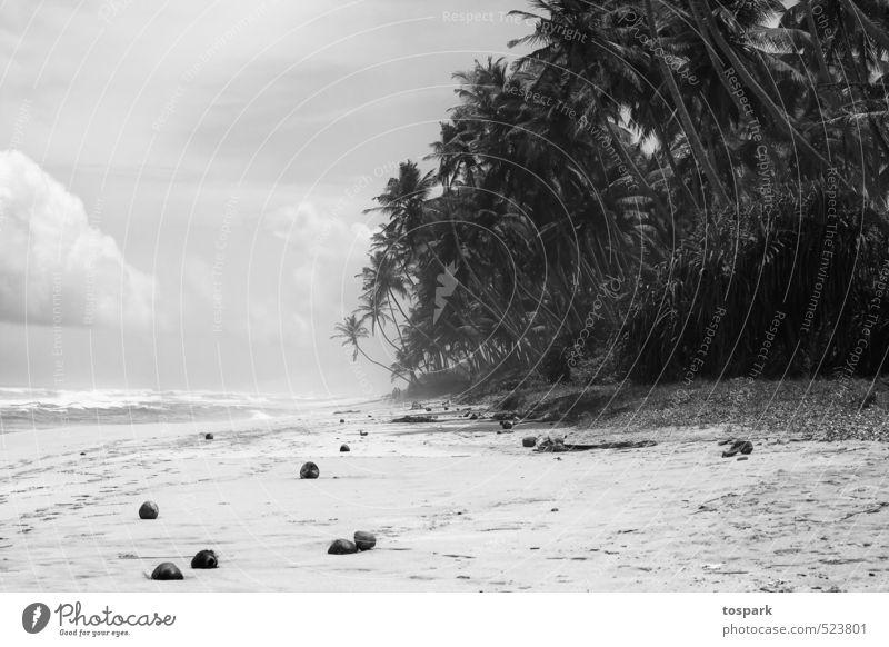 Palmenstrand Himmel Ferien & Urlaub & Reisen Wasser Sommer Sonne Meer Erholung ruhig Freude Wolken Strand Ferne Küste Schwimmen & Baden Glück Wellen