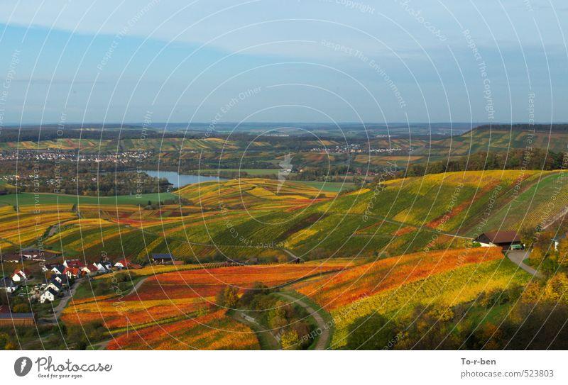 Weinberge treibens bunt Natur Landschaft Himmel Horizont Herbst Feld genießen träumen wandern Fröhlichkeit Unendlichkeit gelb gold orange rot Farbfoto