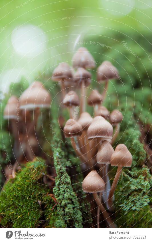 Beatles Natur Ferien & Urlaub & Reisen schön grün Pflanze Landschaft Wald Umwelt Herbst natürlich braun mehrere ästhetisch Ernährung viele Ernte