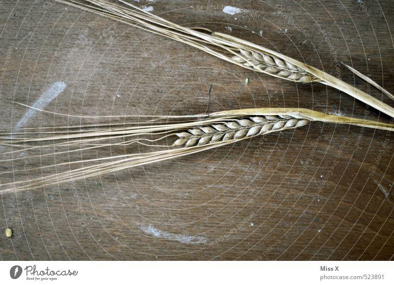 Ähre Gefühle Stimmung Lebensmittel Ernährung einfach trocken Getreide Appetit & Hunger Korn Bioprodukte Vegetarische Ernährung Ähren Holztisch Gerste Roggen Gerstenähre