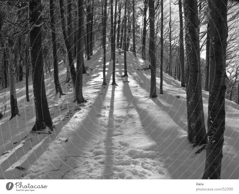 Wintersonne im Wald Baum Schnee