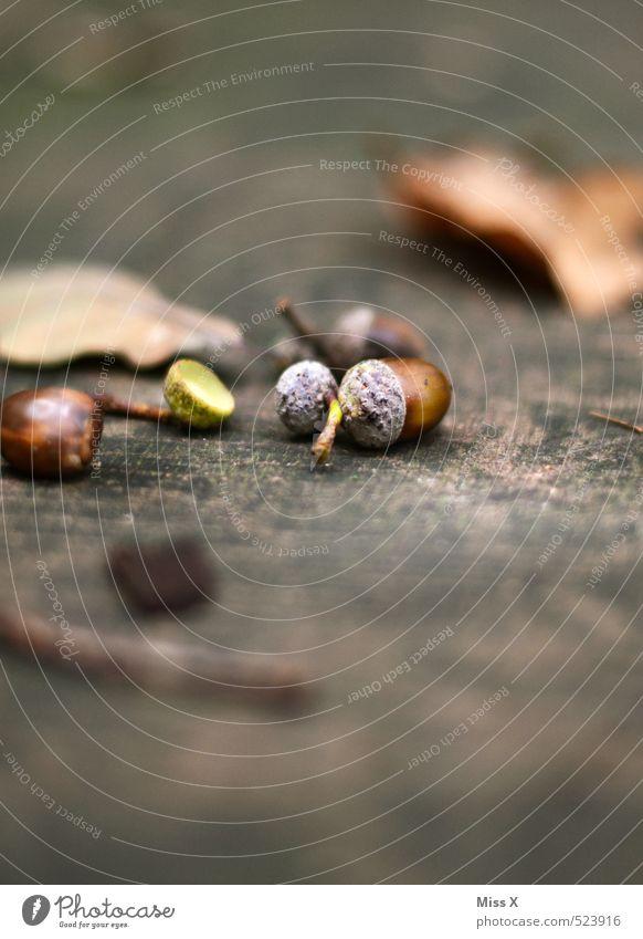 Eicheln Erde Herbst Blatt Wald dehydrieren braun Eichenblatt Holz Herbstlaub herbstlich Baumfrucht Herbstwald Stillleben Farbfoto Gedeckte Farben Nahaufnahme