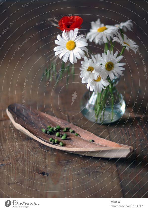 Mohnsamen Blume Blüte Dekoration & Verzierung Tisch Blühend Blumenstrauß Duft Stillleben Schalen & Schüsseln Samen Margerite verblüht Holztisch dehydrieren