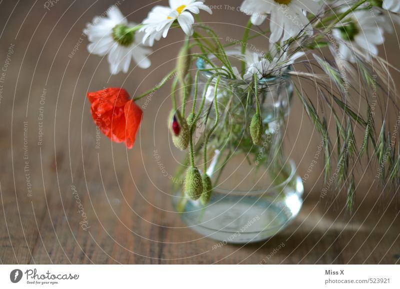 Landhausdeko Dekoration & Verzierung Sommer Blume Blüte Blühend Duft verblüht rot schlaff Vergänglichkeit Mohnblüte Margerite Vase Blumenstrauß Holztisch