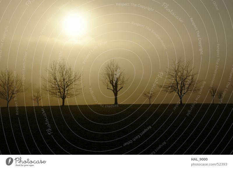 Januar-Sonne Himmel weiß Baum Sonne Winter schwarz kalt Herbst Landschaft Graffiti braun Nebel Bodenbelag Ast Ocker