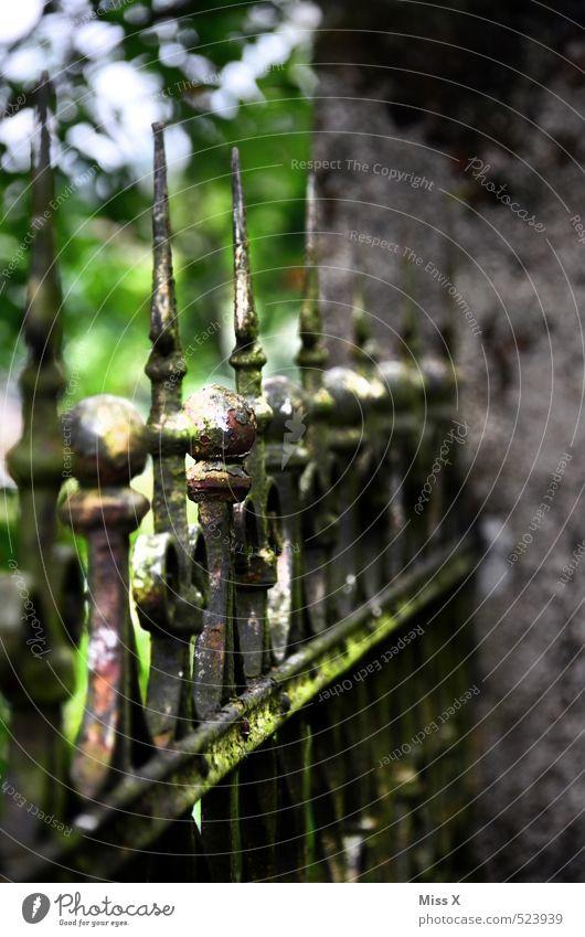 Spitze Garten alt Zaun Metallzaun Schmiedeeisen Zacken Farbfoto Außenaufnahme Strukturen & Formen Menschenleer Morgen Morgendämmerung Licht Sonnenlicht