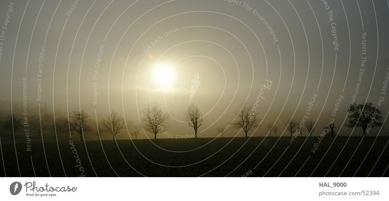 Nebelbänkchen Himmel weiß Baum Sonne Winter schwarz kalt Herbst Landschaft Graffiti braun groß Bodenbelag Ast Panorama (Bildformat)