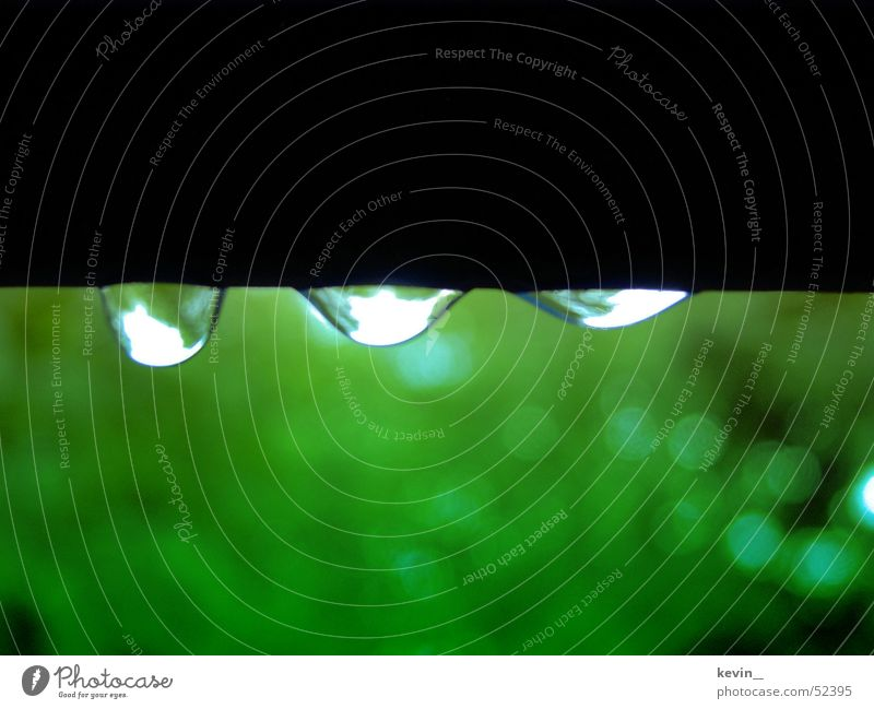 regentropfen Wasser grün Regen Wassertropfen