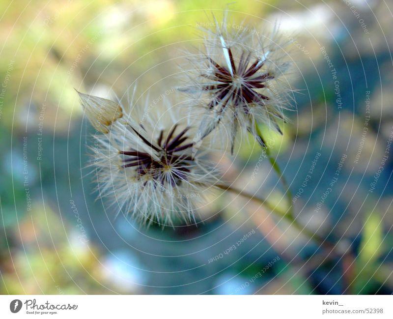 Blume zart