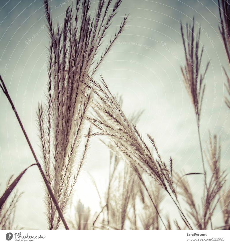 shine Himmel Natur blau schön weiß Pflanze Sommer Sonne Landschaft Winter Umwelt Herbst Gras Frühling Blüte natürlich