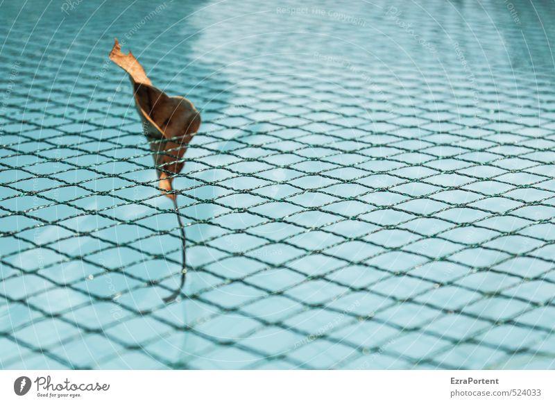 the last one Wellness Schwimmen & Baden Ferien & Urlaub & Reisen Natur Pflanze Herbst Blatt ästhetisch schön blau braun orange einzeln 1 Netz netzartig