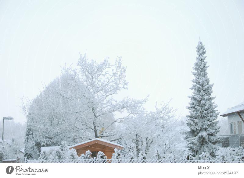 Wintertag Wohnung Haus Garten Himmel Wolkenloser Himmel Wetter Eis Frost Schnee Schneefall Baum Sträucher kalt weiß Schrebergarten Gartenhaus Winterstimmung