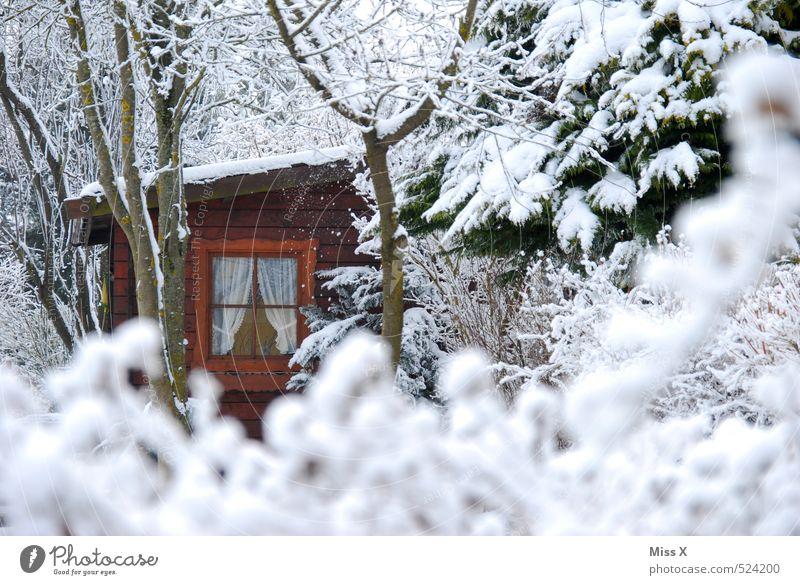 Waldhütte Umwelt Natur Winter Eis Frost Schnee Schneefall Baum Sträucher Garten Hütte Fenster kalt weiß Idylle Schrebergarten Gartenhaus Schutzhütte