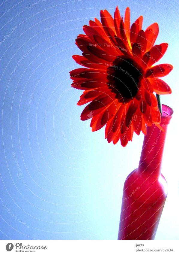 Flaschenblume Blume blau rot Flasche