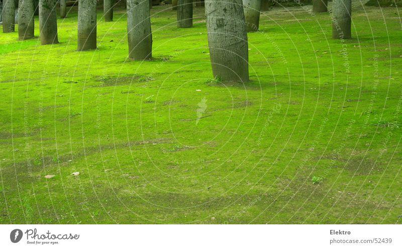 Villa Guilia grün Baum ruhig Wiese Garten Park weich Rasen Frieden Sportrasen Denkmal Baumstamm Reihe Palme Wahrzeichen Moos