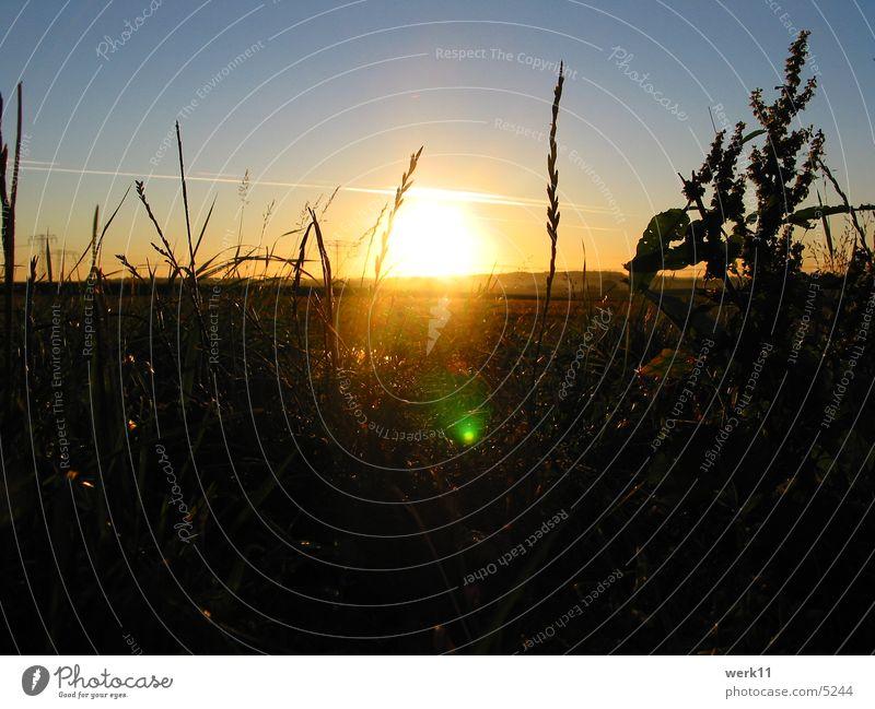 7 Uhr Morgens Sonne Landschaft Stimmung