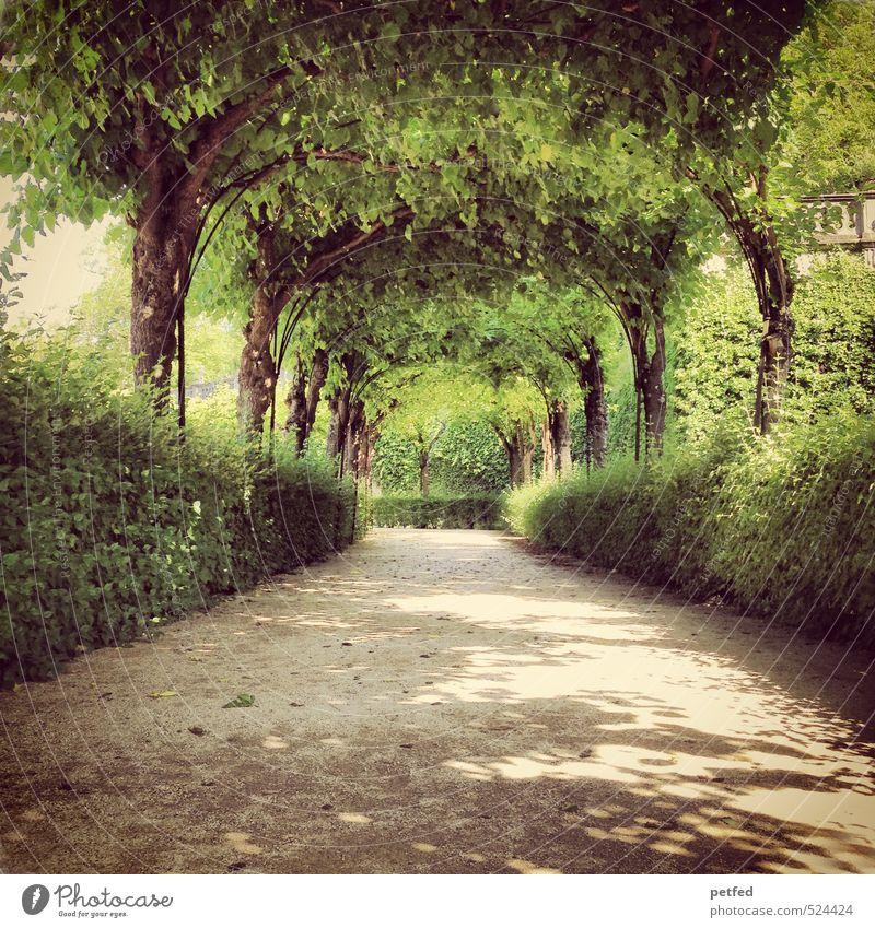 Lustgarten grün Sommer Baum Einsamkeit Wärme Liebe Garten träumen Kunst braun Park Freizeit & Hobby Idylle elegant groß Design