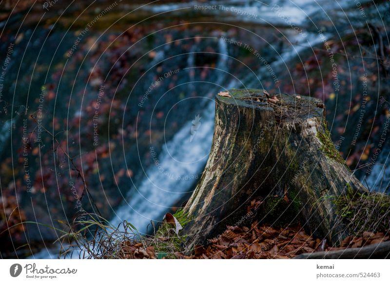 Zwei-Gipfel-Tour | Abgestumpft Umwelt Natur Landschaft Pflanze Wasser Herbst Baum Blatt Baumstumpf Wald Bach alt dunkel nass natürlich feucht Moos Laub Farbfoto