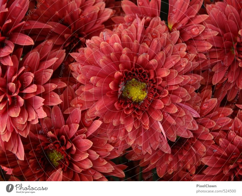 Flower power Natur schön Pflanze rot Erholung Blume Blatt Tier gelb Liebe Blüte Garten träumen Kunst Park orange