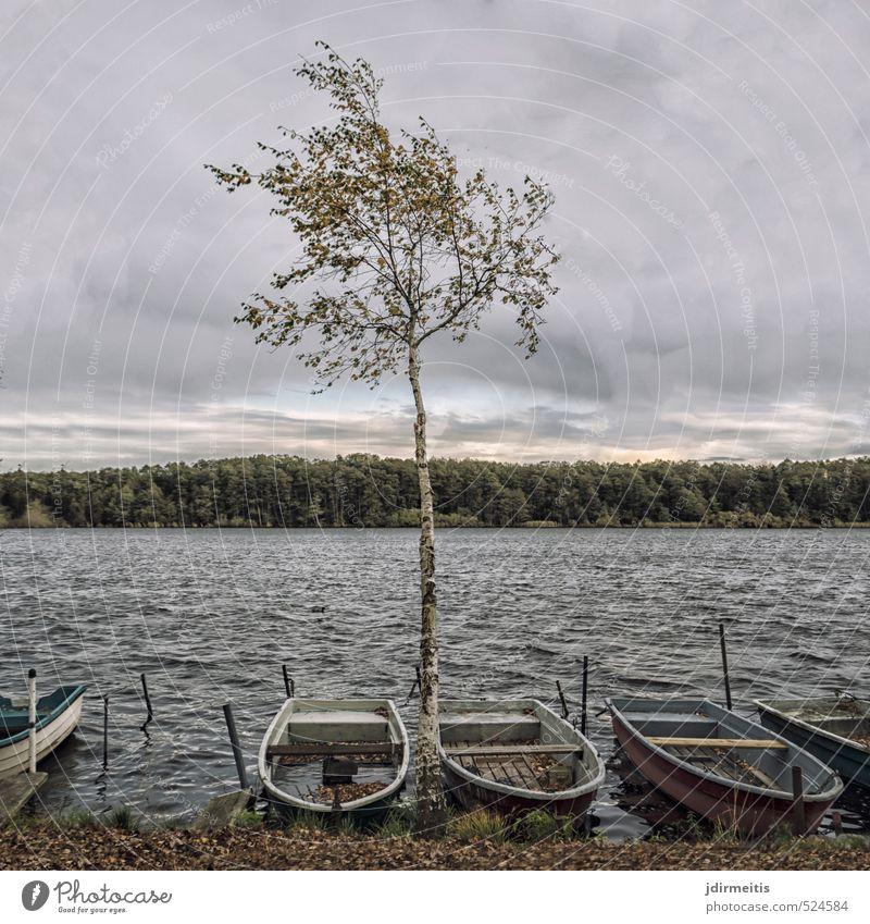 Hintersee Natur Landschaft Wasser Himmel Wolken Herbst Wetter schlechtes Wetter Wind Baum Seeufer Ruderboot Birke Wald Wellen Farbfoto Außenaufnahme