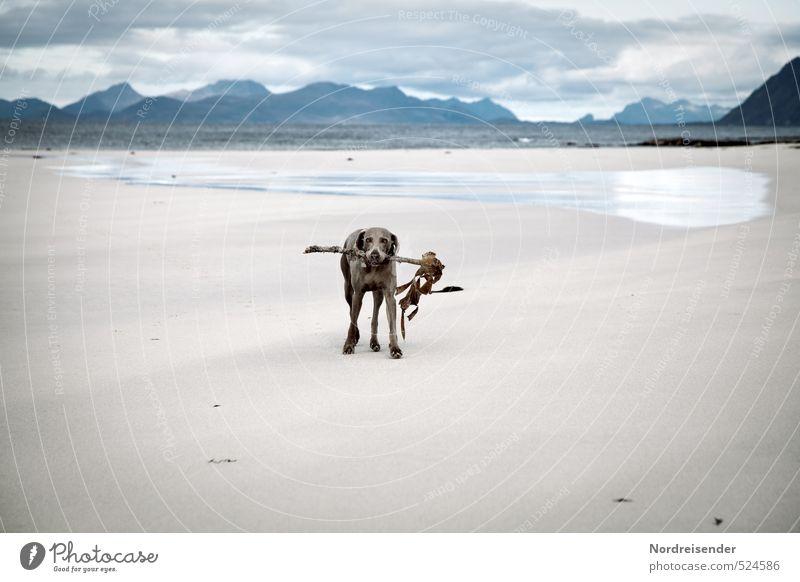 Stöckchen waren aus.... Hund Wasser Meer Landschaft Wolken Tier Strand Ferne Berge u. Gebirge Leben Küste Spielen Sand Wetter laufen Urelemente