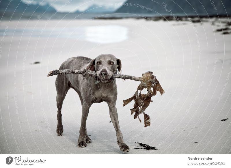 Behelfsknochen.... Vegetarische Ernährung Spielen Ausflug Ferne Freiheit Strand Meer Sand Küste Tier Haustier Hund 1 Fressen Jagd Freundlichkeit Fröhlichkeit