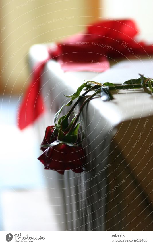 lasst den kopf nicht hängen Tisch Wohnzimmer Blume Rose Blatt Blüte Blühend Duft liegen dehydrieren weinen trocken rot Treue trösten Traurigkeit Sorge Trauer