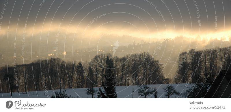 - vernebeltes st.gallen - Nebelwolke Waldrand Winter Sonne St. Gallen Natur Wetter Schnee