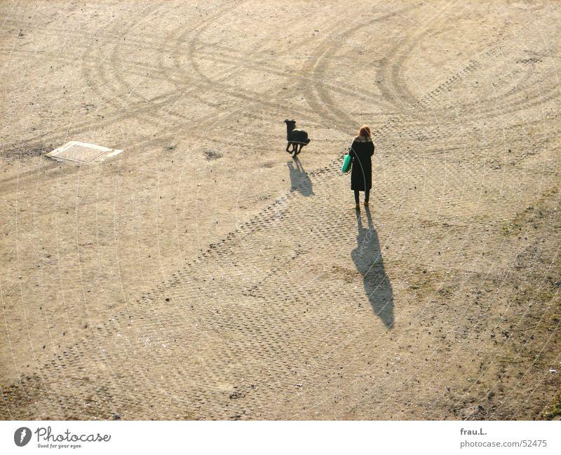 ein bester Freund Frau Hund Platz stehen Plastiktüte Freundschaft Spielen Reifenspuren rothaarig Stock werfen Schatten Sonne Pelzkragen heimweg
