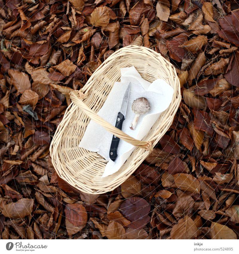 reicht nicht Natur Blatt Wald Herbst klein liegen braun Wachstum Beginn Ernährung einfach Gemüse Herbstlaub Pilz Messer Korb