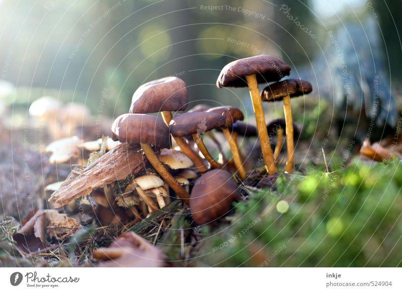 nicht essbar Natur grün Pflanze Wald Umwelt Herbst Gras natürlich braun Wachstum Schönes Wetter Ernährung Moos Pilz Waldboden Waldlichtung