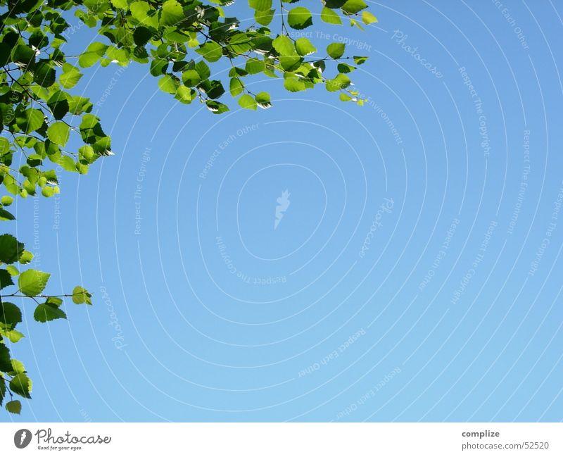 himmel! birkenblätter! Baum Blatt Birke Finnland Sommer grün blau Birkenblätter Ferien & Urlaub & Reisen See Erholung Hintergrundbild himmelblau fein rein