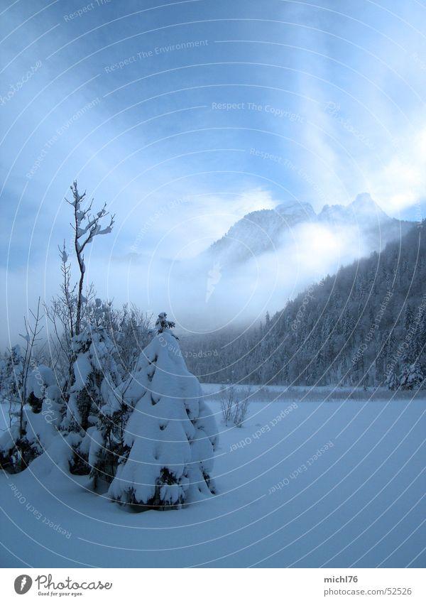 Ein Tännlein stand im Nebel Himmel Natur Baum Wolken Winter Wald Landschaft Berge u. Gebirge Schnee Freiheit hell Eis Nebel Tourismus ästhetisch Frost