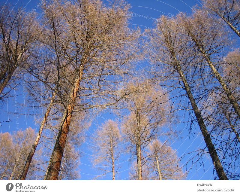 Winter Wald Himmel Baum Sonne Blatt Ast Tanne