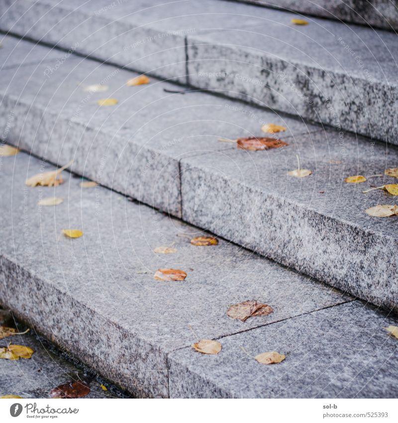 Natur Stadt Blatt Straße Herbst Treppe Häusliches Leben nass nah Stadtzentrum Freitreppe festgeklebt