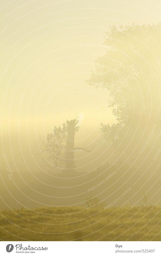 foggy Landschaft Nebel Wildpflanze Feld kalt Stimmung ruhig Reinlichkeit Sauberkeit Morgendämmerung Morgennebel Baumstamm Baumkrone Dämmerung unklar geschlossen