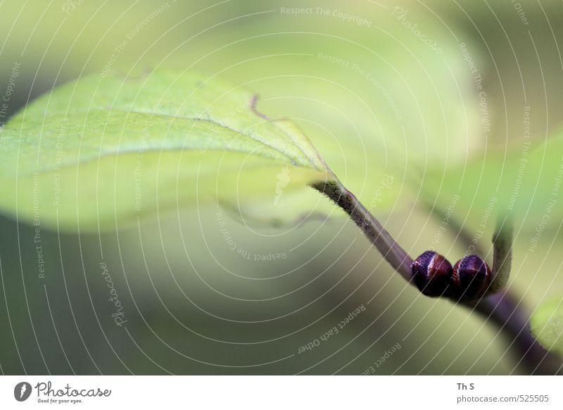 Blatt Natur schön grün Pflanze Wald Umwelt Zufriedenheit ästhetisch nah harmonisch