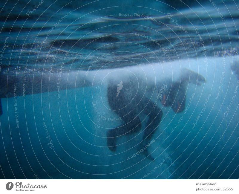JumpIn tauchen Schnorcheln Meer Wellen Gischt Neopren Wassersport Unterwasseraufnahme Fuß Mensch Schwimmen & Baden