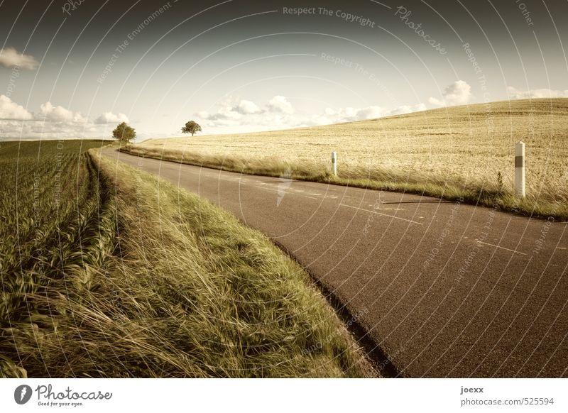 Wärmebild Landschaft Himmel Wolken Horizont Sommer Schönes Wetter Baum Feld Verkehrswege Straße schön braun gelb grün weiß Umwelt Wege & Pfade Landstraße