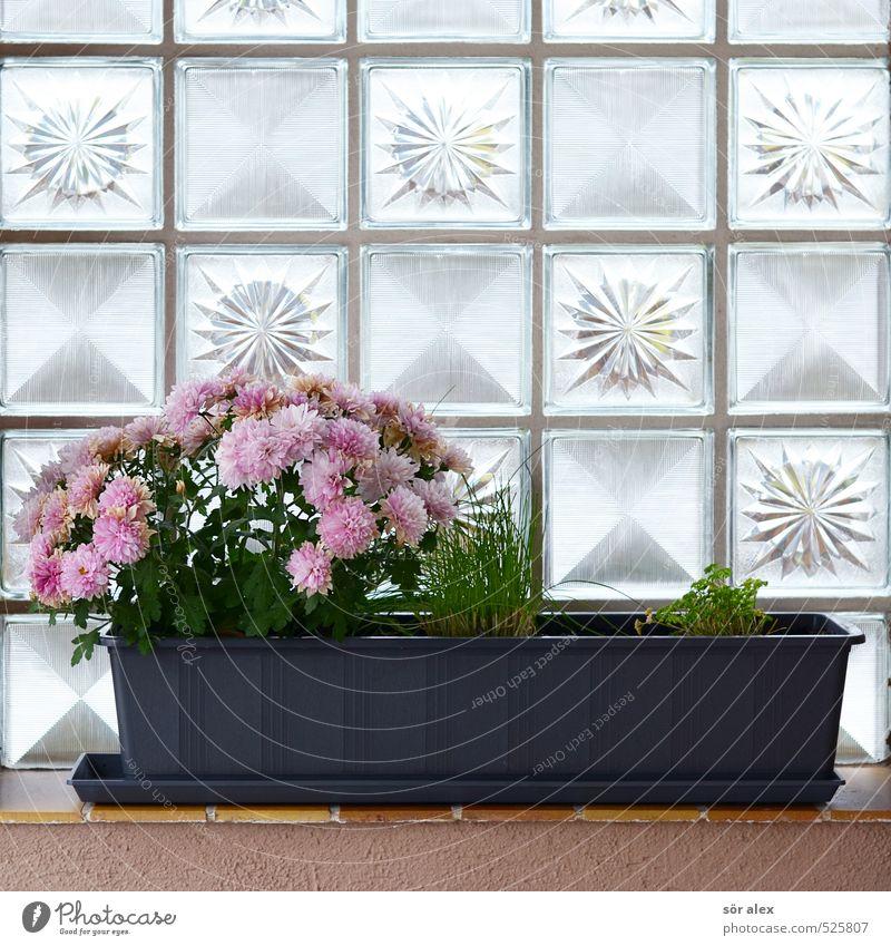 Balkon Deko Pflanze Frühling Sommer Herbst Blume Blüte Topfpflanze Einfamilienhaus Mauer Wand Fensterbrett Glasbaustein schön Kitsch trist